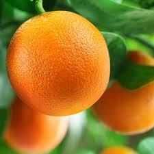 farsibiz_idea_orange